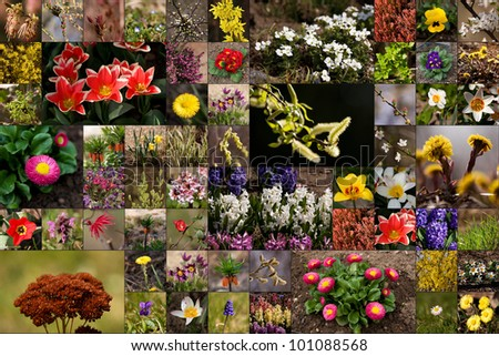 lower collage created from many photos of flowers