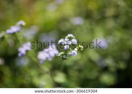 lowers on beautiful bokeh background. - stock photo