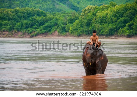 LUANG PRABANG, LAOS - AUGUST 18, 2015: A young mahout is bathing elephant in the Mekong river near Pak Ou cave, Luang Prabang, Laos.