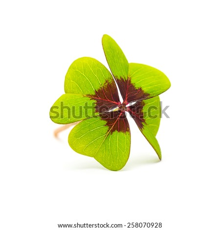 Lucky Clover isolated on white background - stock photo