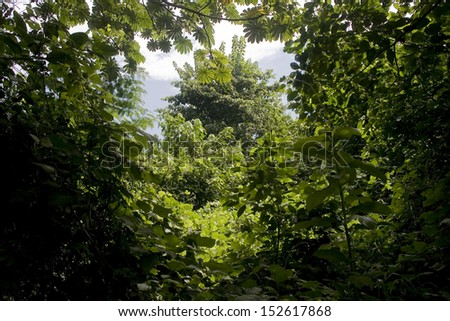 LUKI, DEMOCRATIC REPUBLIC OF THE CONGO, MAY 2009: View of the Luki dense tropical Forest. - stock photo