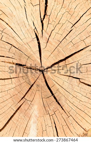 lumber section texture - stock photo