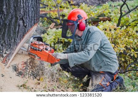 Lumberjack cutting a huge oak tree - stock photo