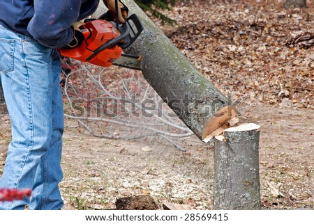 how to cut down a tree with a reciprocating saw