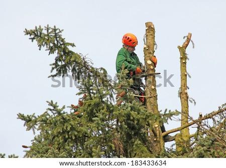 lumberjack in the fir tree top, cutting down a tree - stock photo