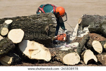 Lumberjack is sawing tree trunks (focus on the man) - stock photo