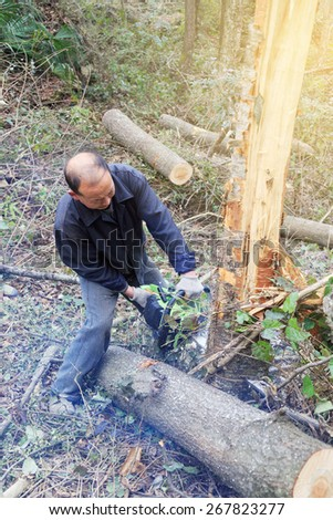 Lumberjack logger worker cutting firewood timber tree in forest with chainsaw in mountain.