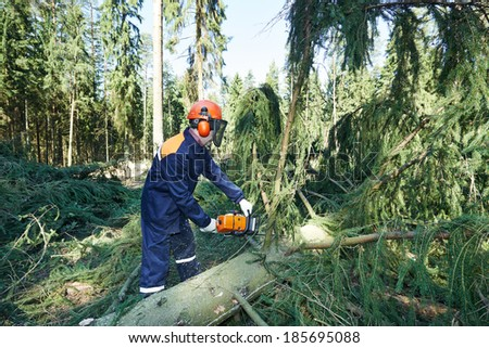 Lumberjack logger worker in protective gear cutting branch of timber tree in forest with chainsaw - stock photo