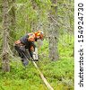 Lumberjack Worker  chainsaw cuts branches - stock photo