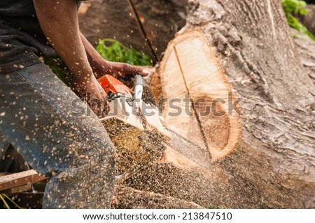 Lumberjack worker in full protective gear cutting firewood in forest with a professional chainsaw - stock photo