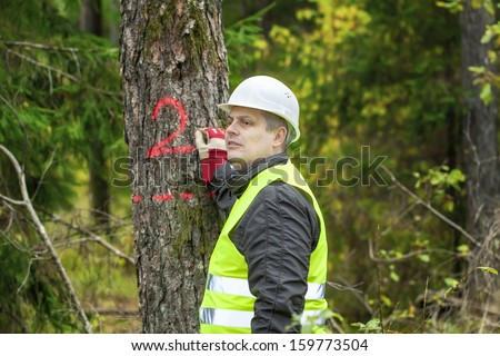 Lumberjack write on tree in forest  - stock photo