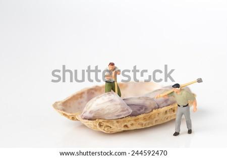 lumberman with peanut on white background - stock photo