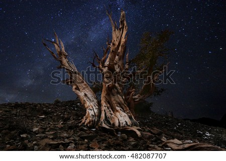 Luminous Light Painted Landscape of  Stars in Bristlecone Pines