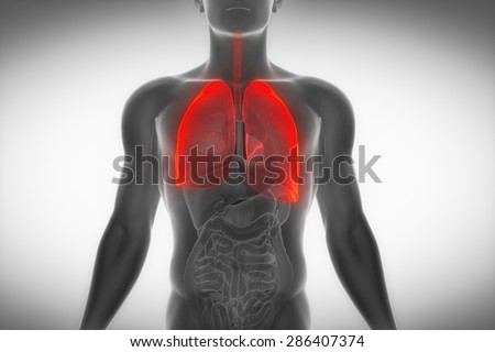 LUNGS  male anatomy x-ray front view - stock photo