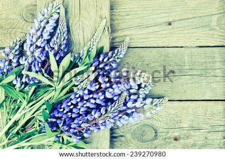 Lupine flowers  - stock photo