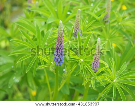 lupine flowers in the forest