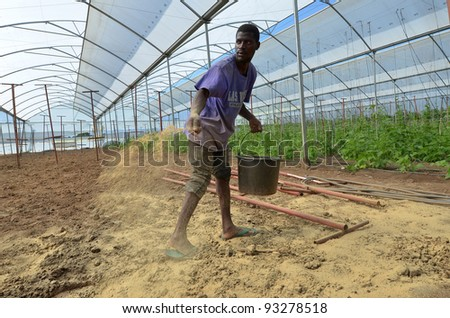 LUSAKA,ZAMBIA - DECEMBER 2: Farmer seed potatoes in greenhouses that provide employment to 800 farmers, on December 2,2011 in Lusaka, Zambia - stock photo