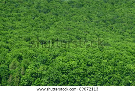 luscious rain-forest background - stock photo