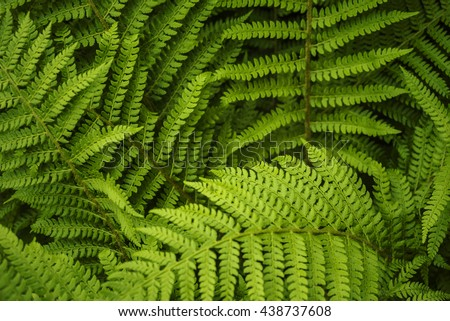 Lush and deep green leafy ferns. - stock photo