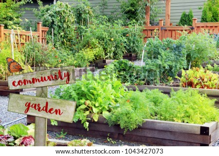 Lush and organic community vegetable, fruit and herb garden in summer with wooden sign.