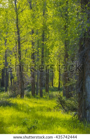 Lush beautiful green forest wooded scene tree grass landscape scenic