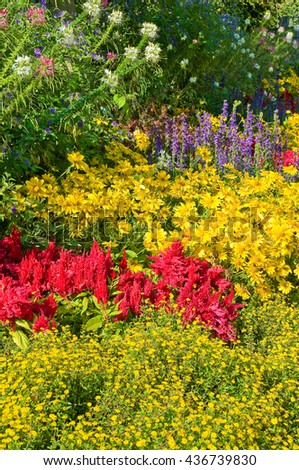 Lush blooming perennial bed; Planting in cottage garden; Garden design with perennials