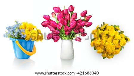 Lush bunch of cheerful elegant vivid deep rose color tulips in flowerpot and circle blowballs with boraginaceae isolated on white background with clipping path. View close-up with copy space for text  - stock photo