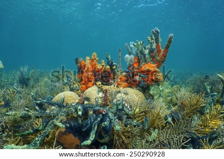 Lush Caribbean coral reef underwater composed of a high diversity of sea life including corals and sponges, Panama - stock photo