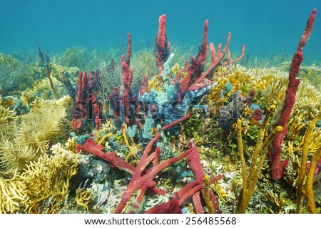 Lush Caribbean coral reef underwater with colorful sponges, natural scene - stock photo