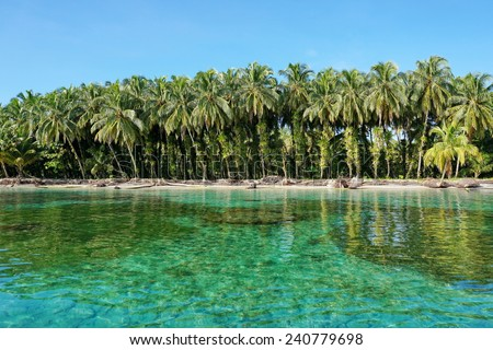 Lush coconut trees with epiphytes on tropical shore with clear water, Caribbean, Zapatillas islands, Bocas del Toro, Panama
