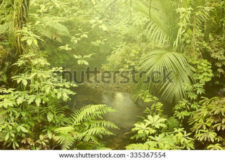 Lush foliage and stream in rain forest - stock photo