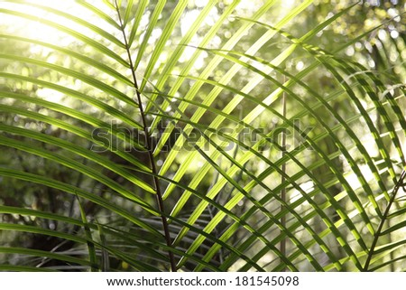 Lush foliage in rain forest - stock photo