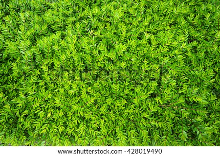 Lush foliage of growing bushes. Natural green background. - stock photo