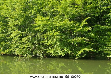 Lush forest vegetation near water
