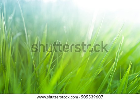 Lush, fresh green grass background