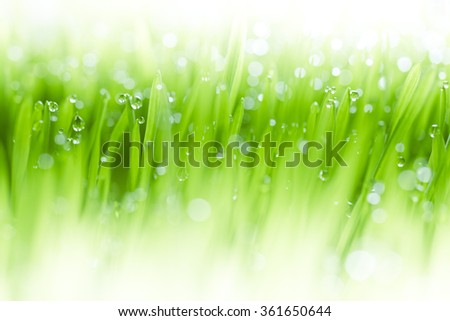 Lush, fresh green grass background with moisture drops - stock photo