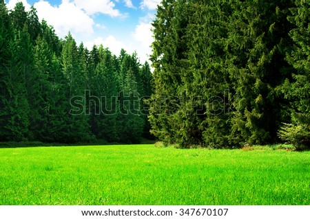Lush grass on a idyllic forest glade