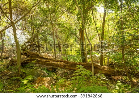 Lush green African jungle landscape with an old fallen tree in Botswana, Africa - stock photo