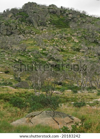 Lush green alpine vegetation in Snowy Mountains - stock photo