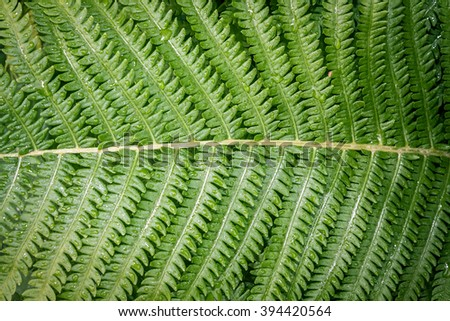 Lush green fern leaf with water drops - stock photo
