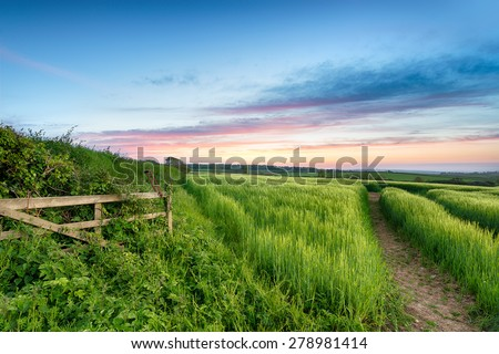 Lush green fields of barley growing in the English countryside - stock photo