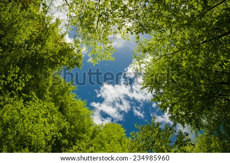 Lush green foliage and sky with clouds in the forest in spring   - stock photo