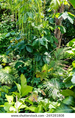 Lush green foliage in a tropical rain forest - stock photo