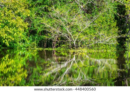 Lush green foliage of the Amazon rain forest being reflected in a river near Iquitos, Peru - stock photo