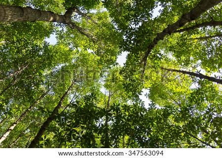 Lush green foliage, trees , upper view - stock photo