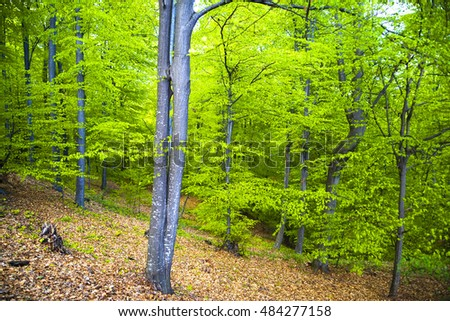 Lush green forest in spring, peaceful atmosphere