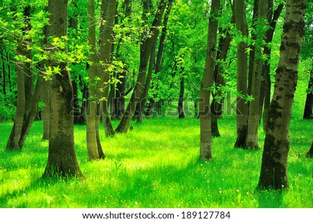 Lush green forest in the spring, vibrant colors - stock photo
