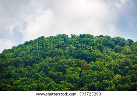 Lush green forest on the mountain peak. Dense vegetation on the background of cloudy sky. - stock photo