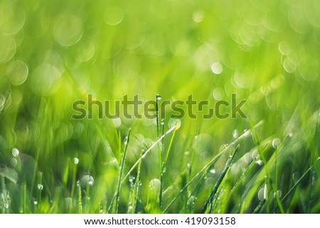 lush green grass covered with sparkling drops of dew - stock photo