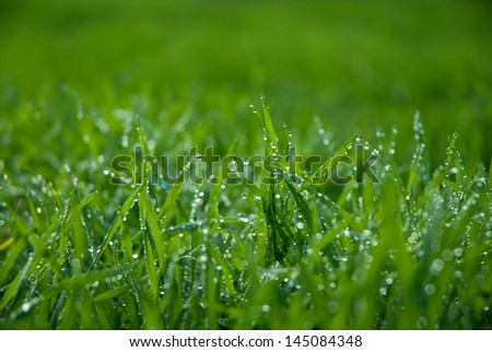Lush green grass with drops